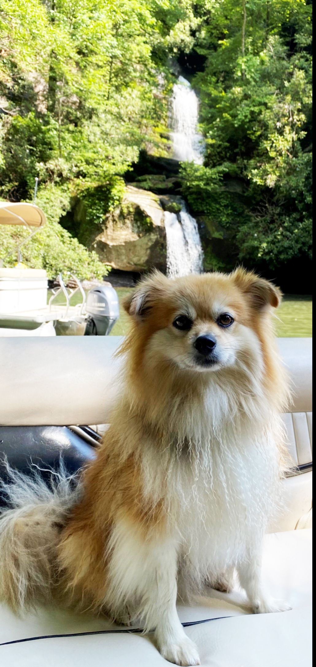 Pepper: Submitted by Irene Hammer Pepper is chilling and enjoying the beautiful waterfalls on Lake Jocassee.