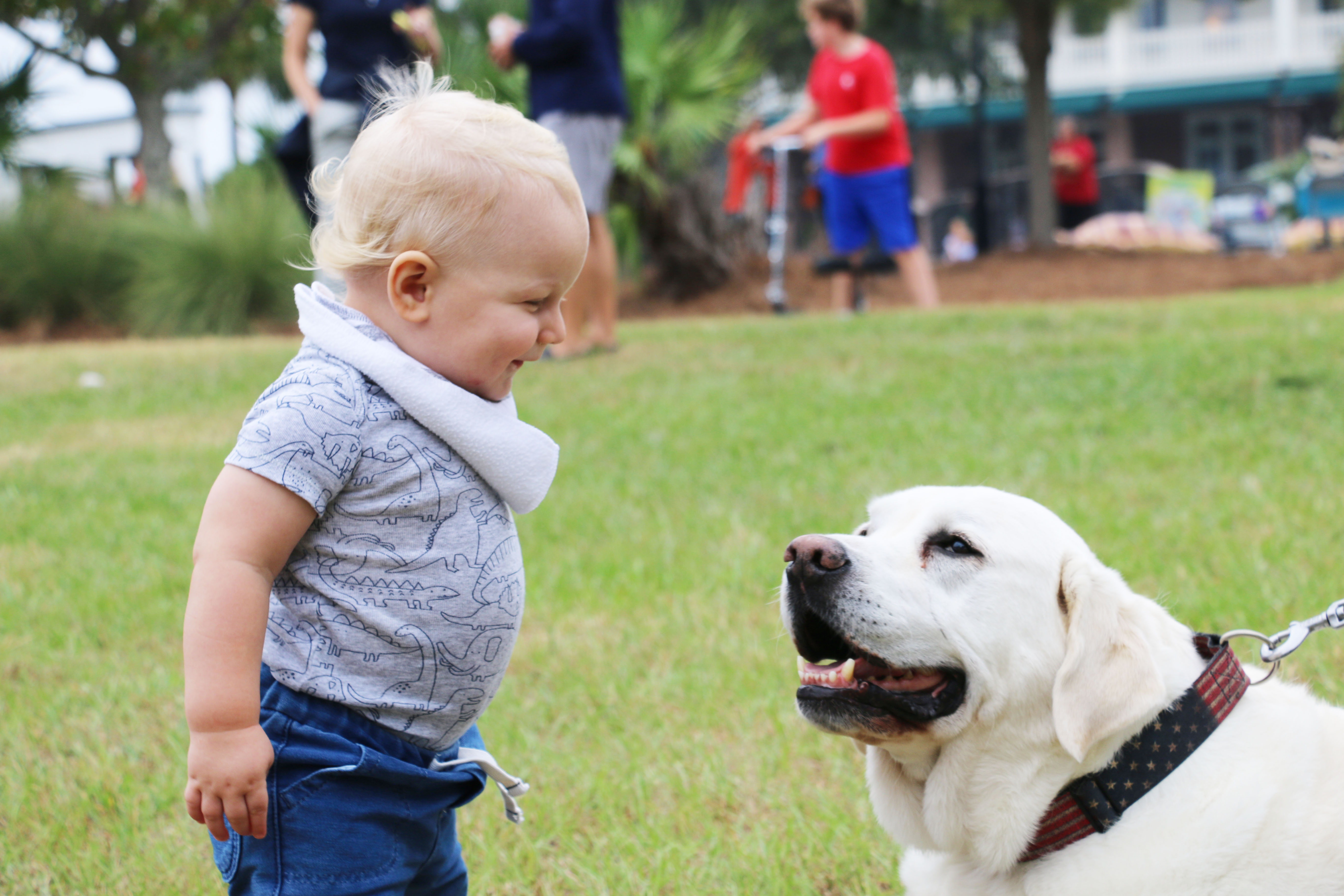 Griff Livsey, 1, of Mount Pleasant, enjoys playing with Splash, a yellow lab that has been a Daniel Island resident for 12 years.